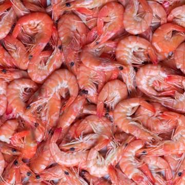 Crevettes roses Label Rouge...