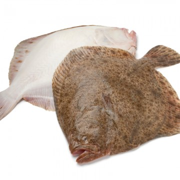 Turbot Entier Sauvage -...