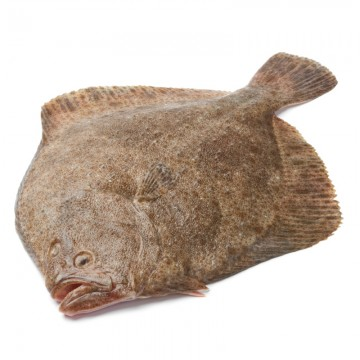 Turbot Entier Sauvage - 1.5kg